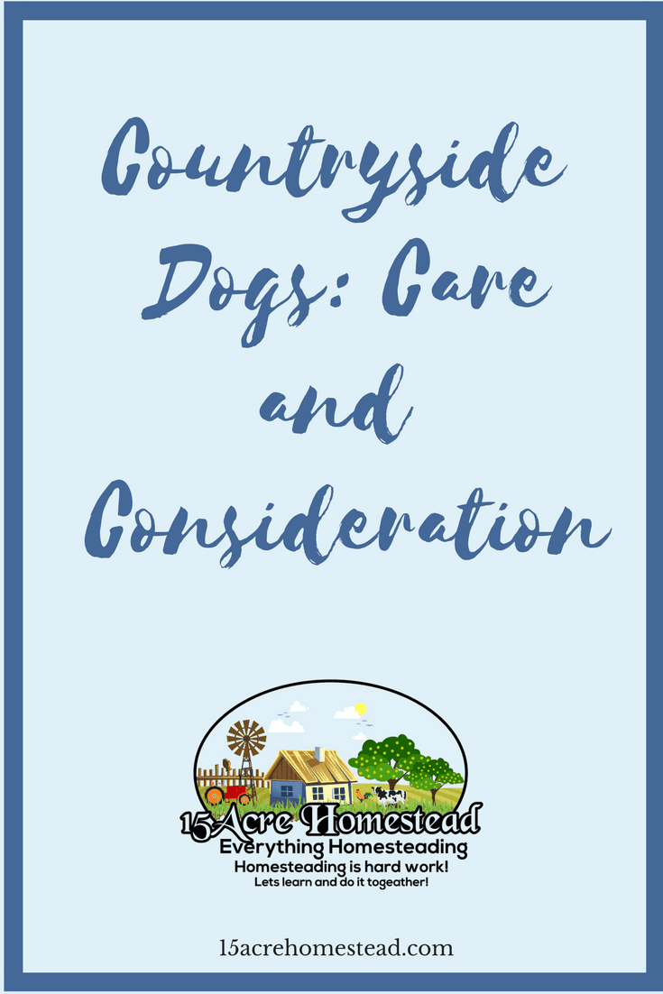 There are different methods to caring for countryside dogs than dogs that reside in an urban area.