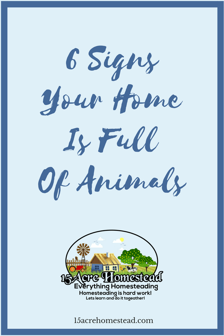 These are the 6 signs that show your home is filled with animals and how you can keep up better with them.