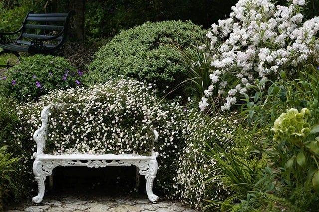 luxurious garden