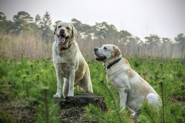 countryside dogs