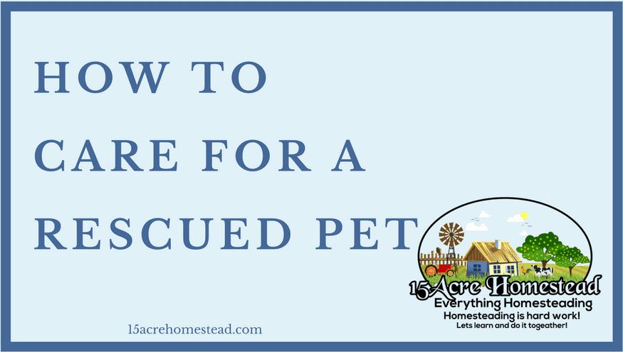 rescued pet