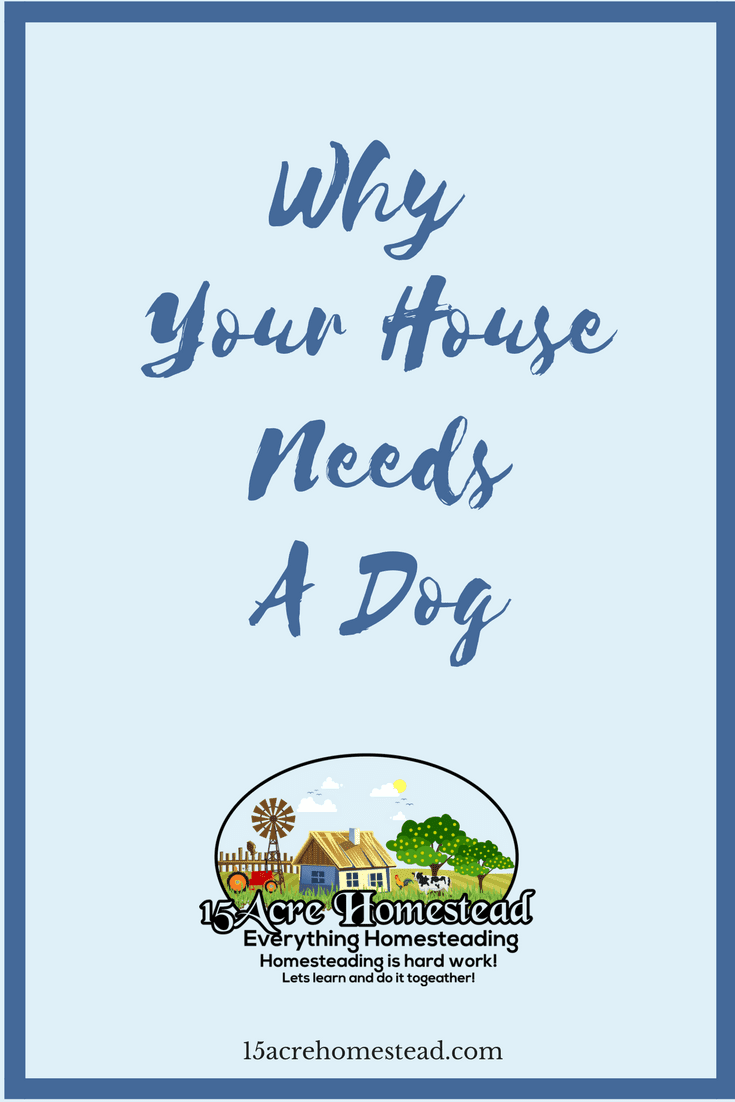 Dogs are special creatures and the benefits that come with owning them are amazing. Your house needs a dog for so many reasons.