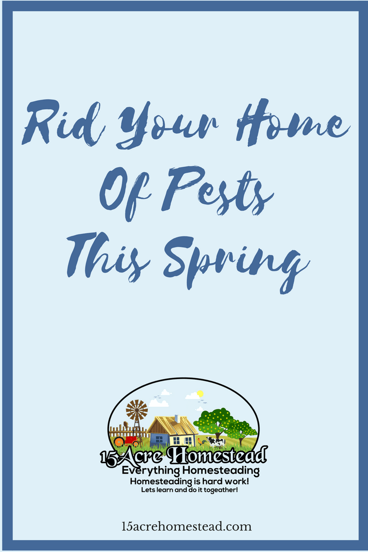 Follow these simple tips and tricks to rid your home of pests this spring.