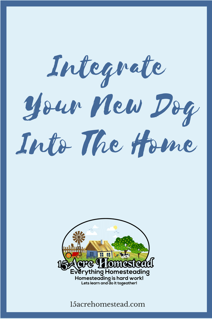 Getting a new dog can be exciting but stressful. Integrating the new pet into your home is simple if you follow these guidelines.