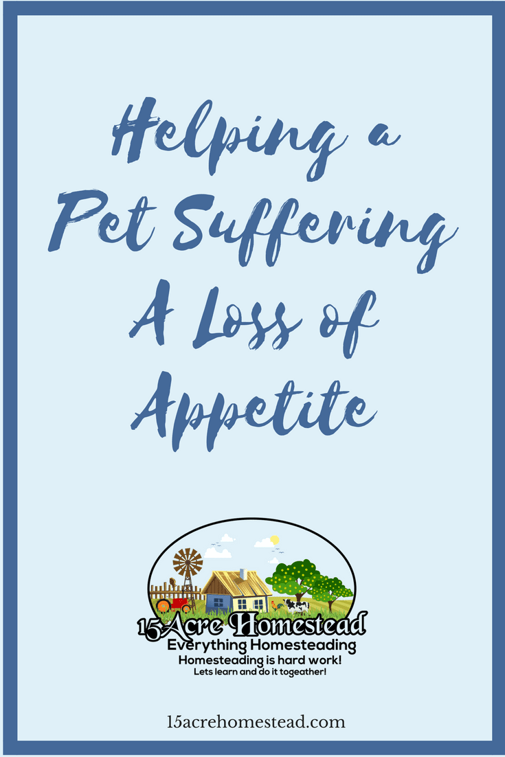 Is you pet suffering from a loss of appetite_ Here are 3 simple ways to solve the problem.