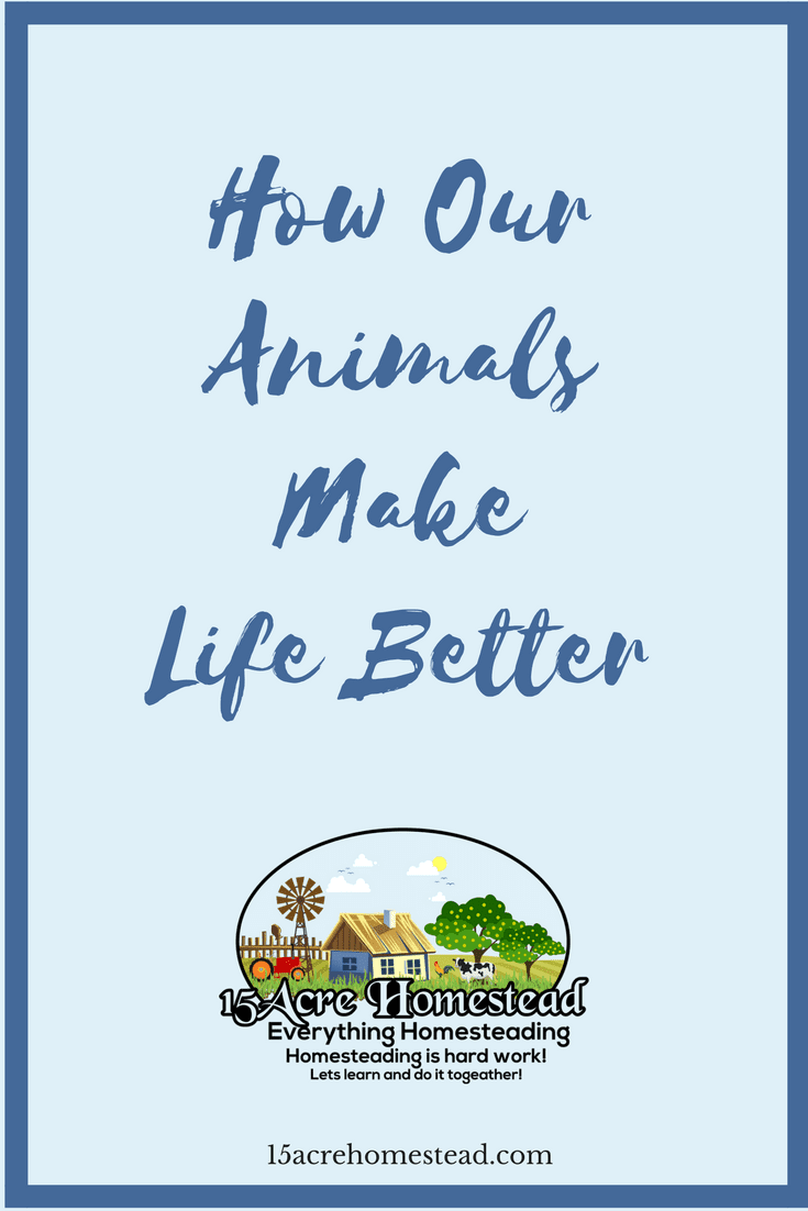 There are so many ways that our animals make life better. Here are just a few of those ways.