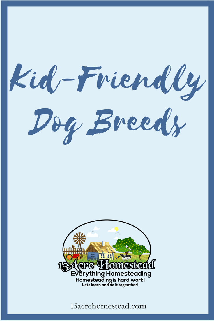 There many kid-friendly dog breeds and choosing the right one for your family should be fairly simple after reading these suggestions.