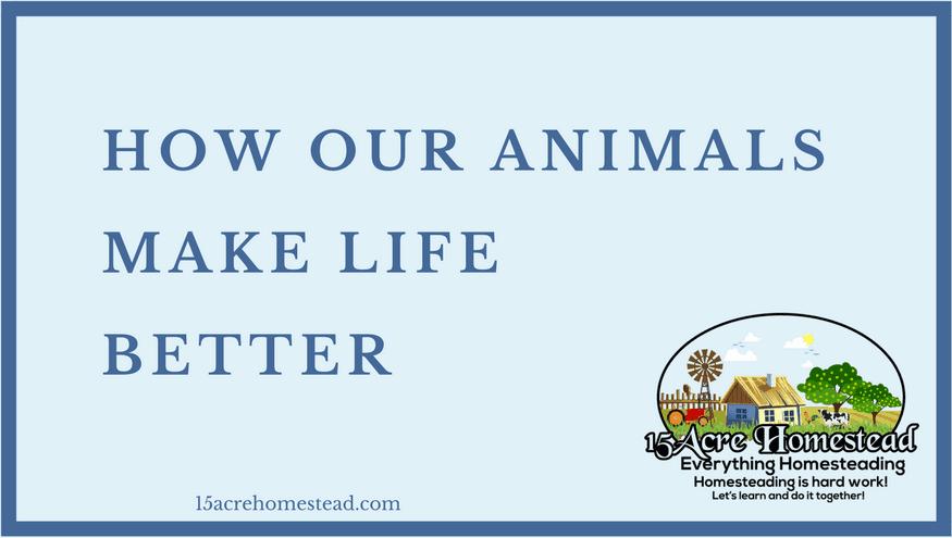 animals make life better