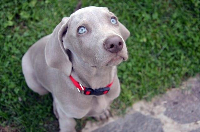 kid-friendly dog breeds