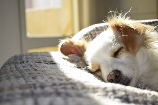 why your house needs a dog