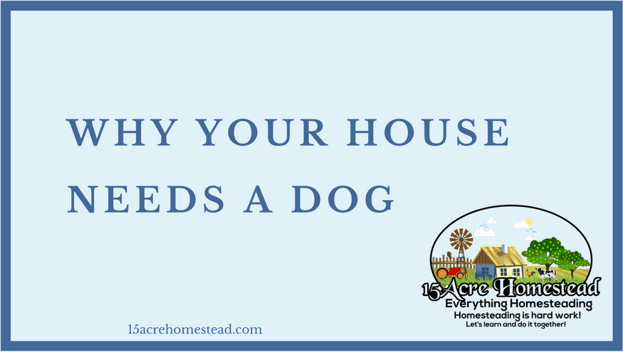 your house needs a dog