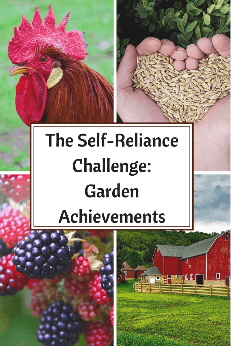 Come see how we did during week 2 of the Self-Reliance Challenge and check out our garden achievements.