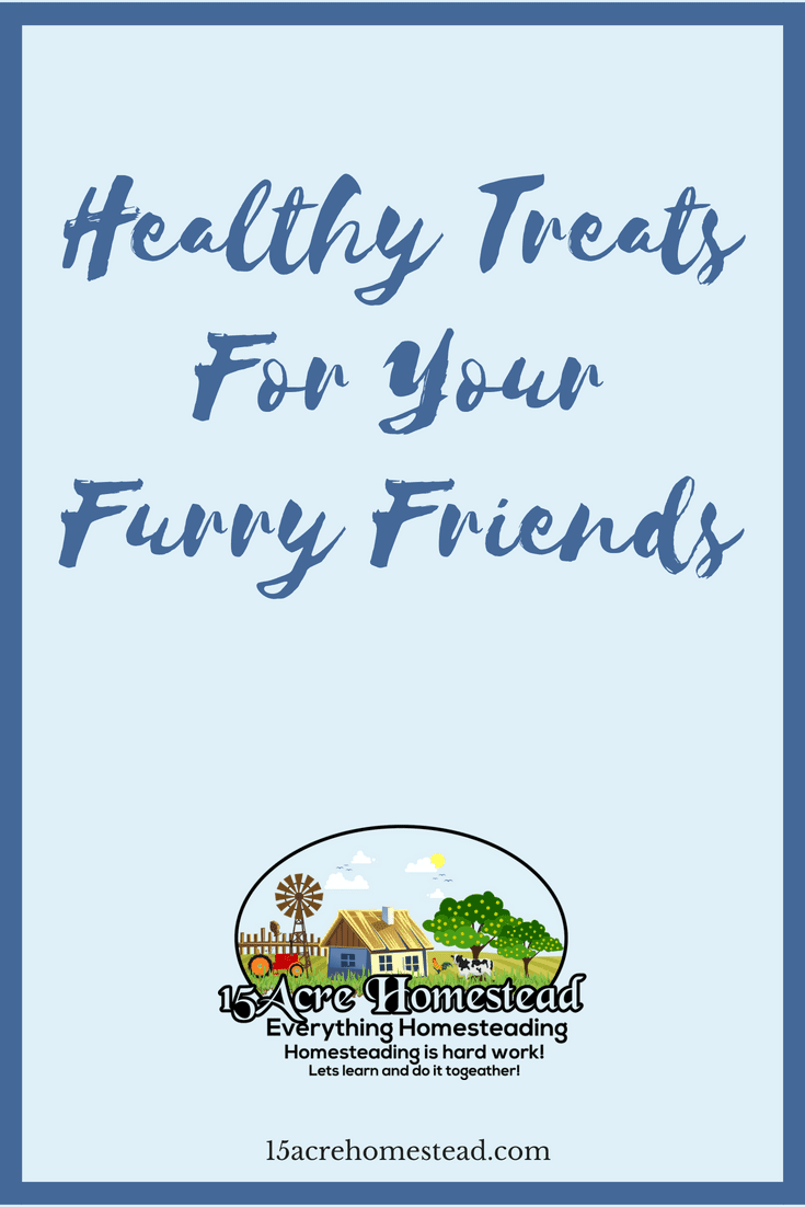 Commercial treats sold in stores are not good for your furry friends. Here are some healthy treats that promote great health.