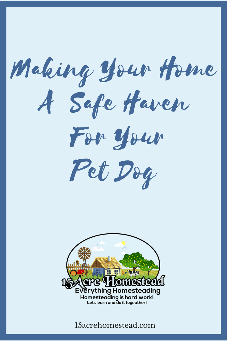It is so important that you make your home safe before bringing a pet dog home.