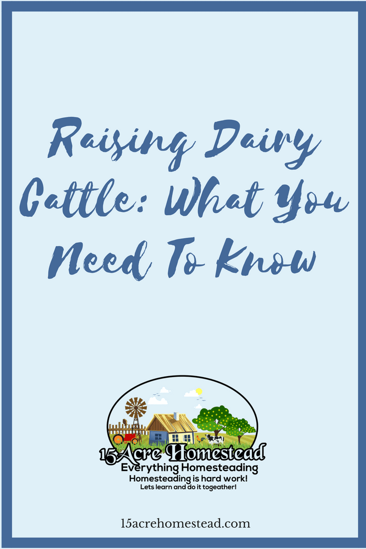 Raising Dairy Cattle: What You Need To Know - 15 Acre ...