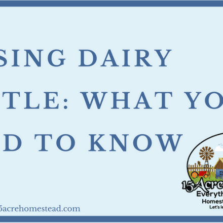 Raising Dairy Cattle: What You Need To Know