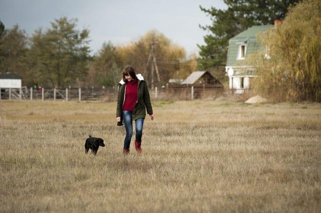 homesteading chores