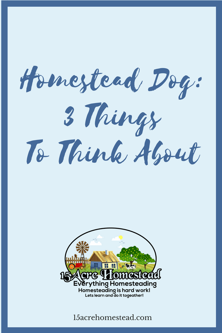 Having a homestead dog can be rewarding if you follow these 3 things.
