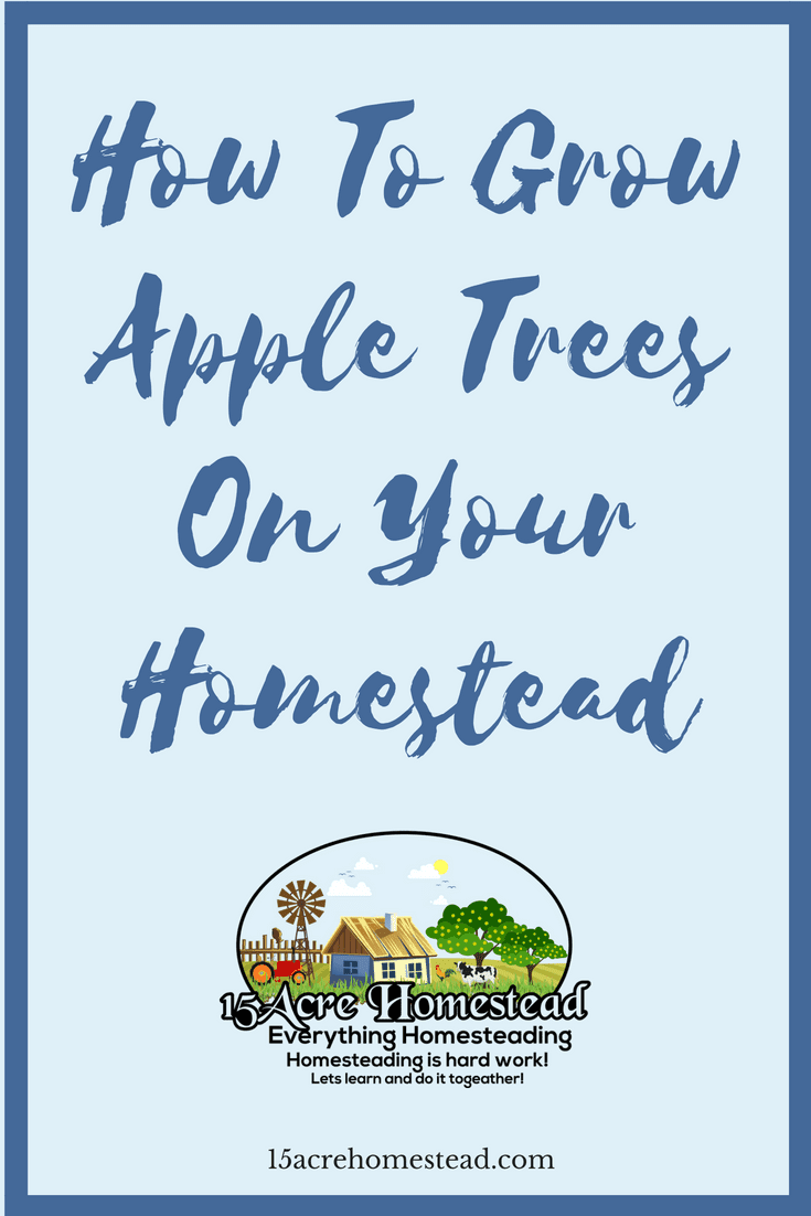 Learning to grow apple trees on your homestead can provide fruit for your family as well as an additional income.