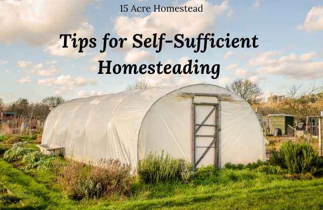 Featured image for Self-Sufficient Homesteading