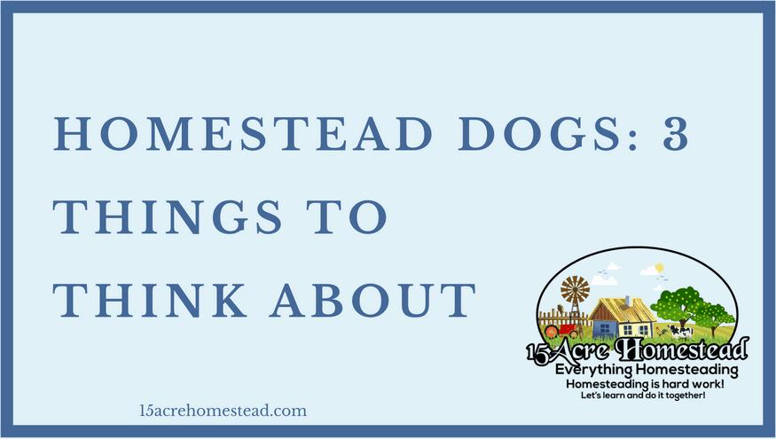 homestead dog