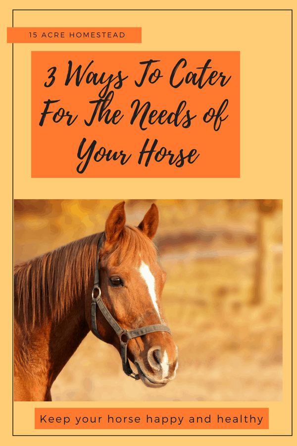 Caring for your horse can be easier if you follow these simple steps to assure their health and well-being.