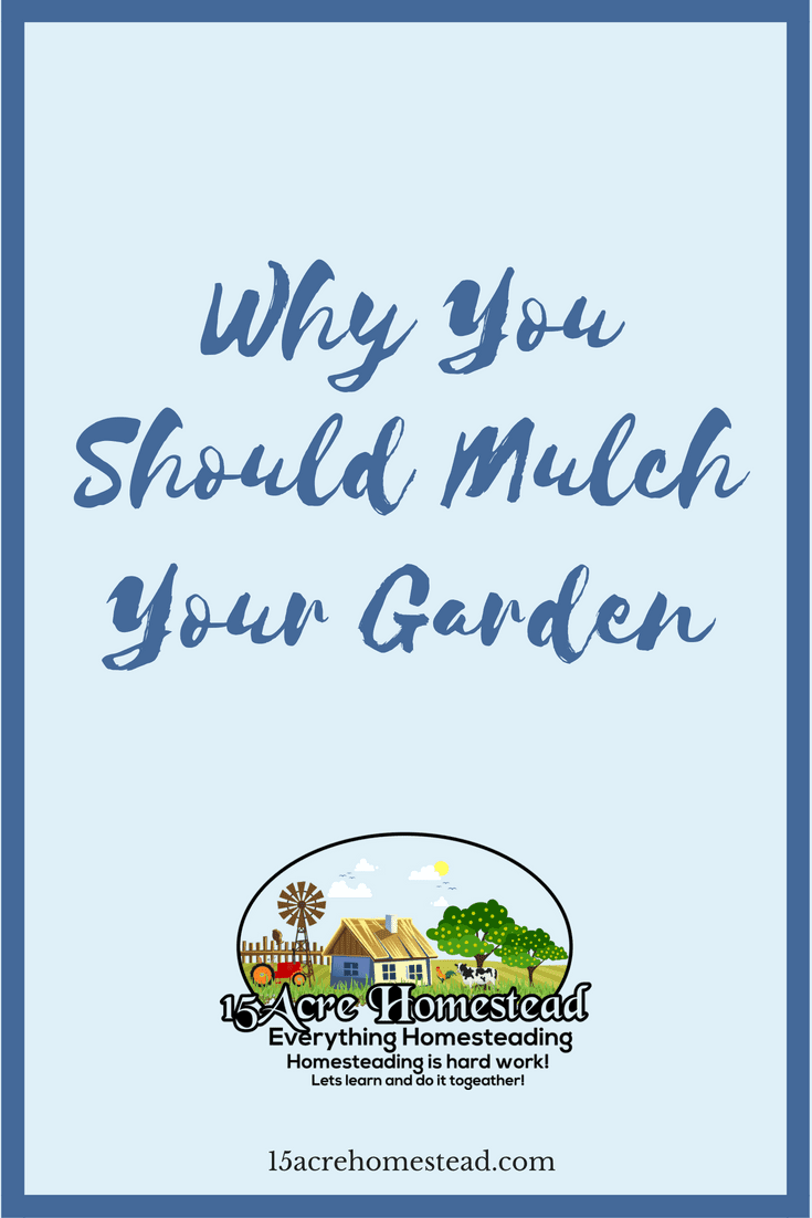 Understanding the difference between compost and mulch is important. Using mulch in your garden is even more important.