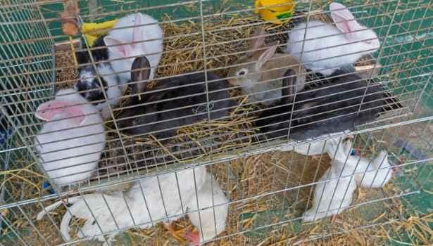 Rabbits in a hutch.