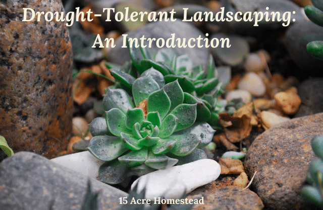 Practicing drought-tolerant gardening can help preserve and protect your garden from the summer heat.