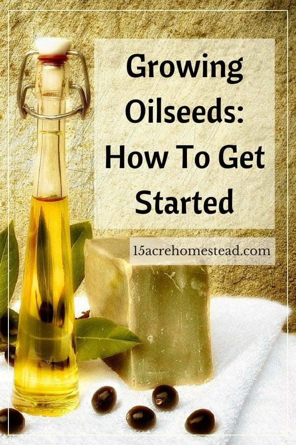 Growing oilseeds is easy once you learn how.
