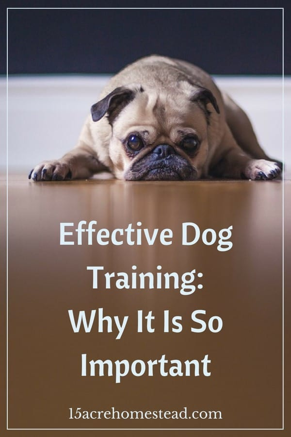 Learn how and why you should train your pooch now.