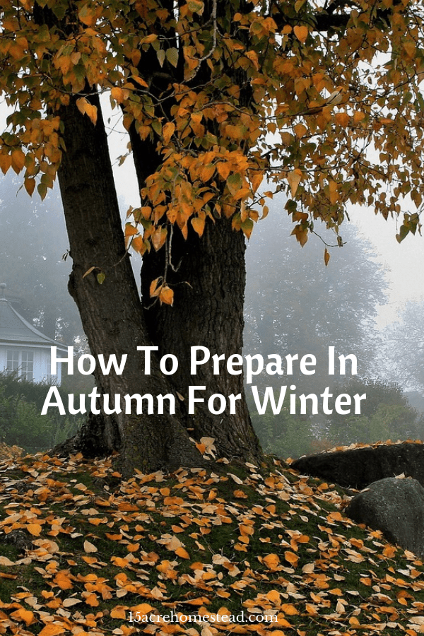 Autumn is often seen as the big clear up, exposing the ground to let mother nature do its work over the winter in breaking down soil structure with sharp frosts.
