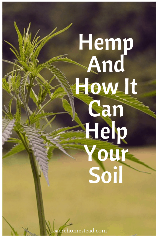 Learn about hemp and why it is so good for your soil.