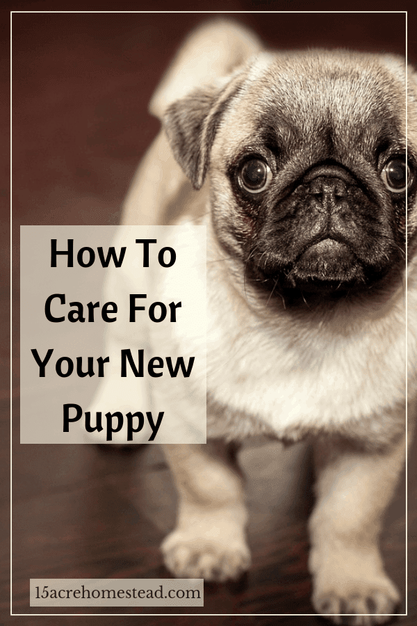 Learn some quick tips and tricks to make the adjustment easier for you and your new puppy today.