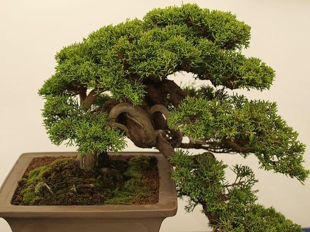 bonsai potting mix