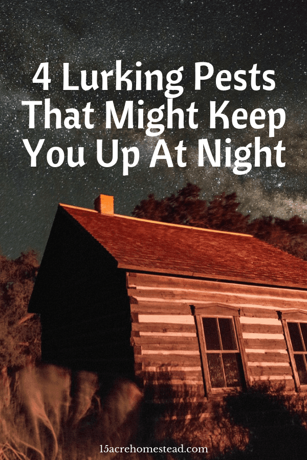 Some of these lurking pests could be keeping you awake at night!