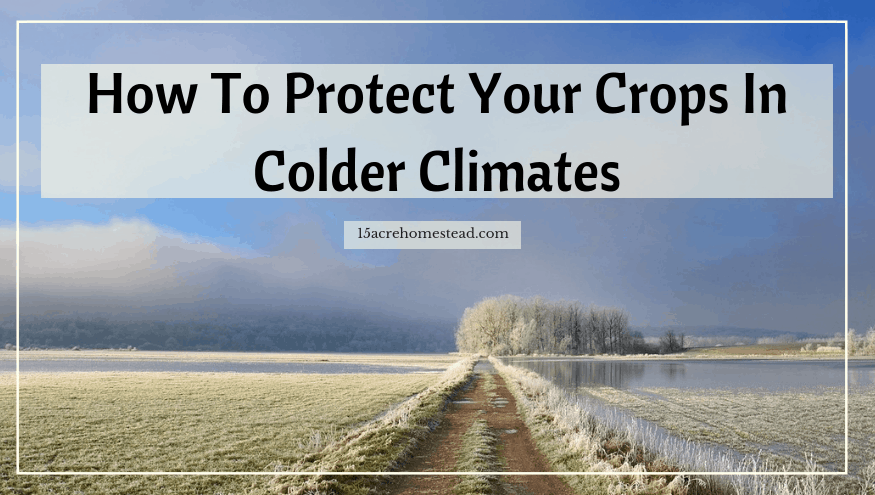 protect your crops