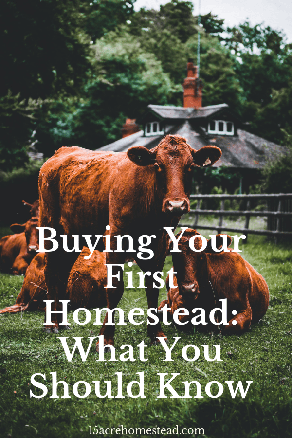 Homestead purchasing does vary in a few significant ways. This will be a business as well as a home, after all.