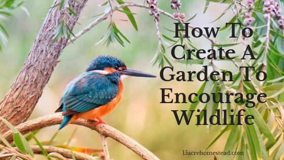 encouraging wildlife