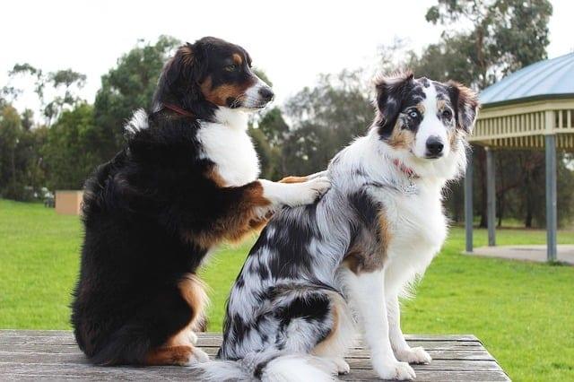 puppy behaviors
