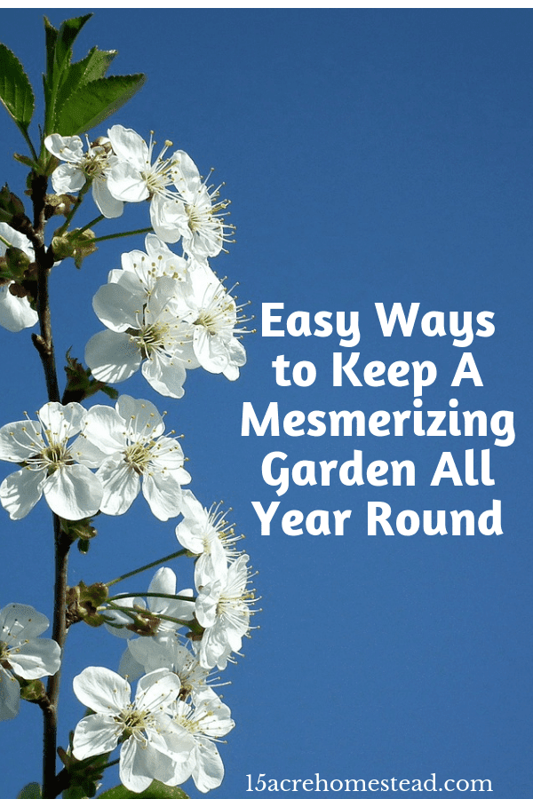 There are so many ways you can have a mesmerizing garden year round.