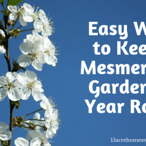 Easy Ways to Keep A Mesmerizing Garden All Year Round