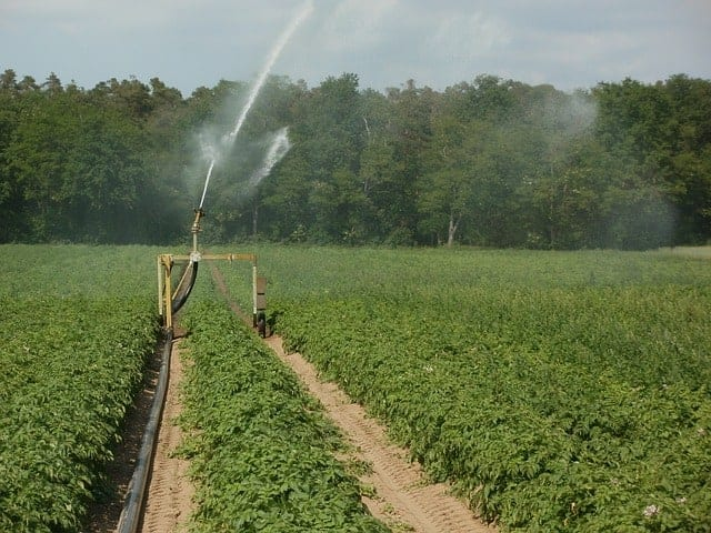 crop growing tips