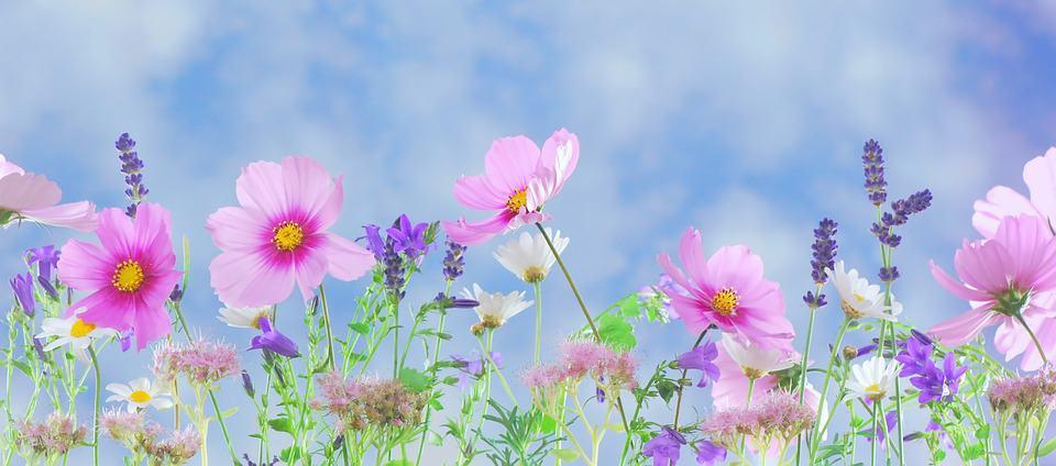 mesmerizing garden