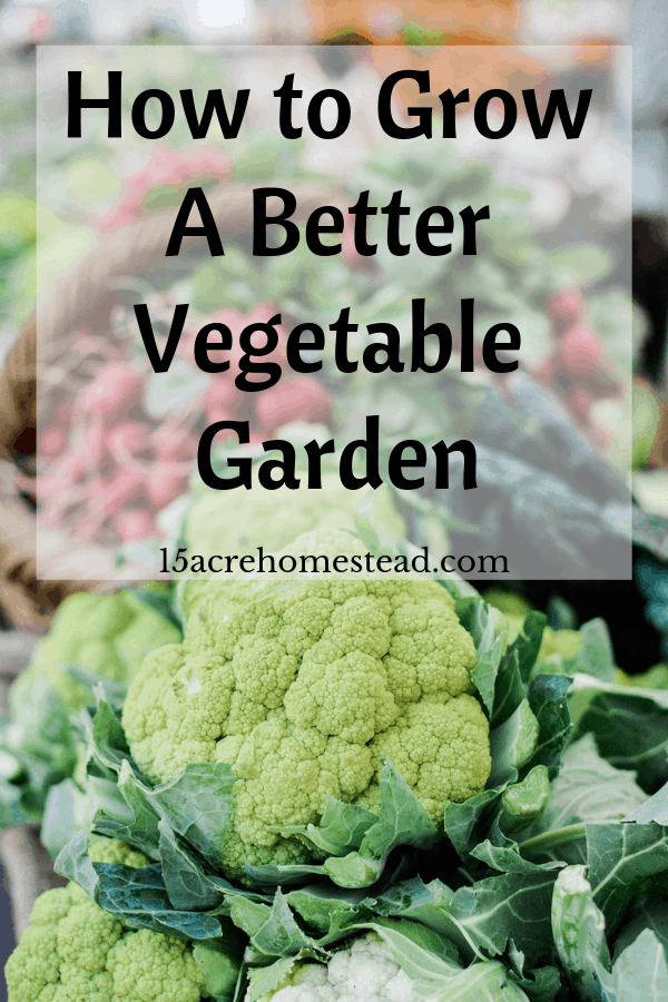 When it comes to growing your own vegetable garden, a lot of it is trial and error. One year the seasons might be on your side and the next you might struggle.