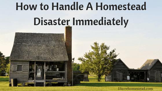 homestead disaster