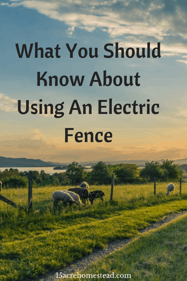 Among all the fencing methods, an electric fence is the most suitable method to control the cattle and domestic animals. Here's everything you should know.