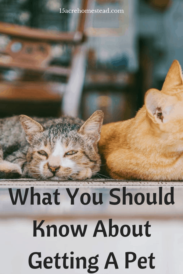 Getting a pet comes with responsibility and commitment. Do you have what it takes?