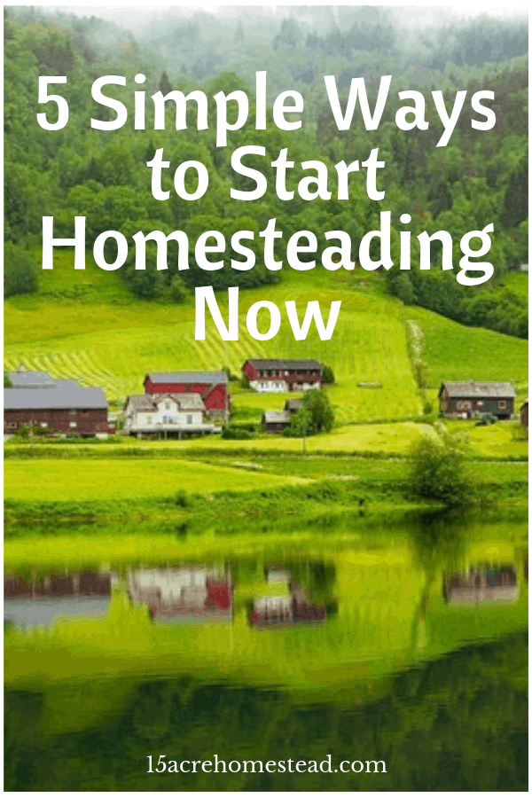Homesteading is a lifestyle centered around self-sufficiency and connection with the land and even though it has its benefits and challenges, the advantages tend to be plentiful enough to outweigh any inconveniences you might encounter. Here are five simple ways you can start homesteading.