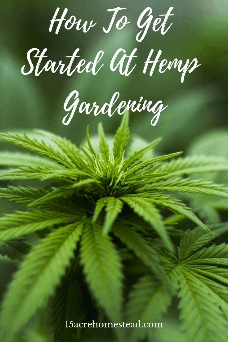 Gardening is one of the most therapeutic hobbies that anybody can have. Once you start gardening you may want to try hemp gardening!